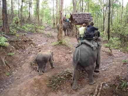On our elephant tour