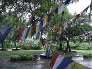The garden surrounding the Maya Devi temple