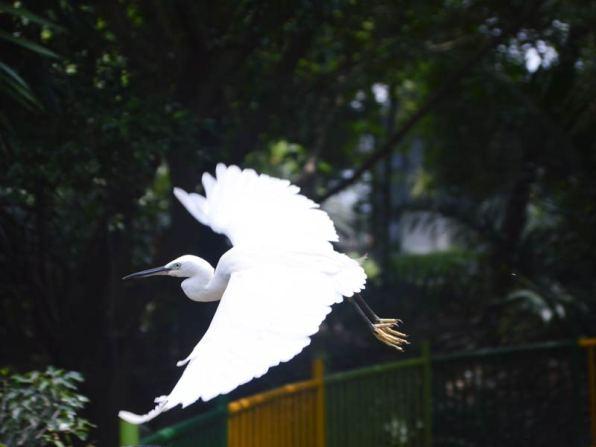 Vườn chim Đầm Sen