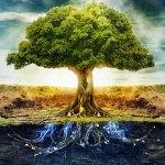 Дървото на живота във вашия дом