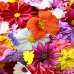 Пожелания за Цветница