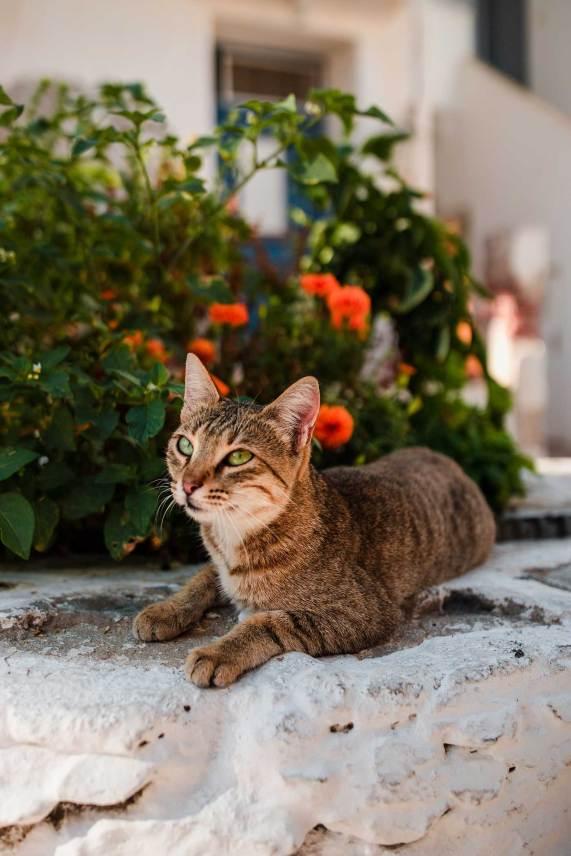 Paros-Greece-Travel-Guide-Exploring-Naoussa-Cats