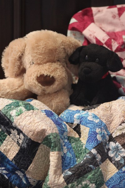 Puppies on quilt
