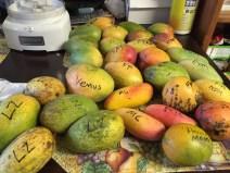 sfloridamangoes2