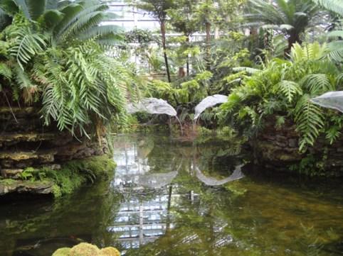 Fern Room pond installation E