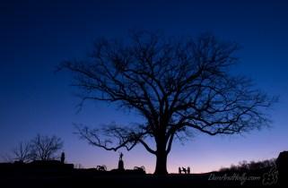 POTW: The Devil's Den Witness Tree