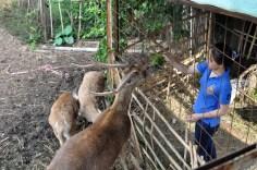 aktivitas paling diminati anak-anak - memberi makan rusa