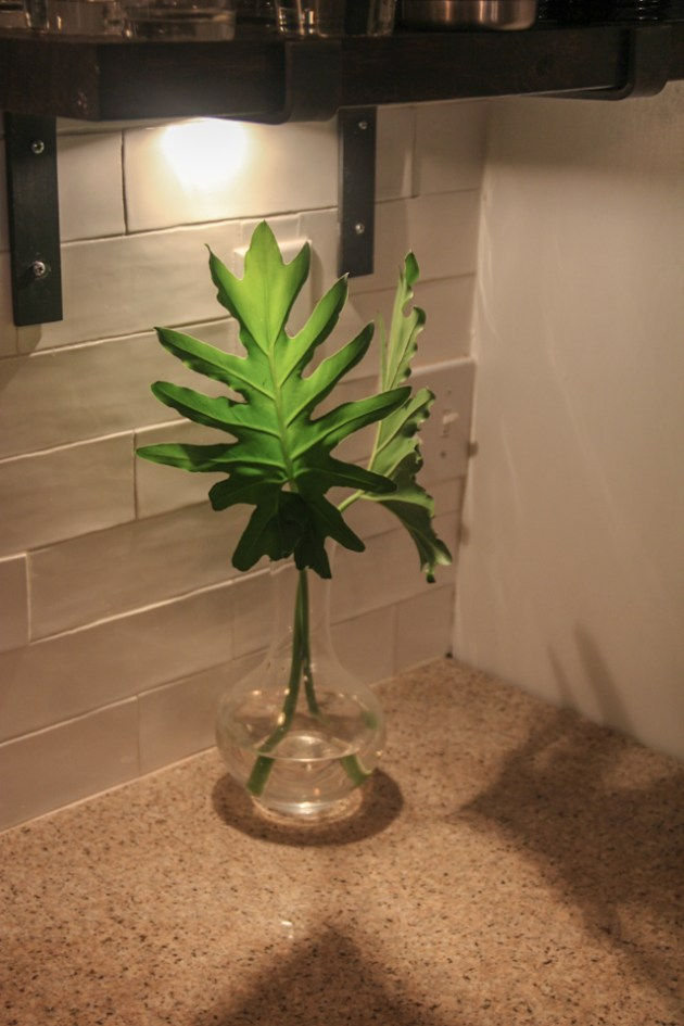 DIY plant, kitchen decor, plant clippings