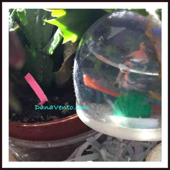 DIY Spring Cleaning House Plants , diy, spring, spring cleaning, house, house plants, dust, light, air, sun, cleaning, lavish, water, springtime, dead plants, how to, bubble wrap, shred, dana vento
