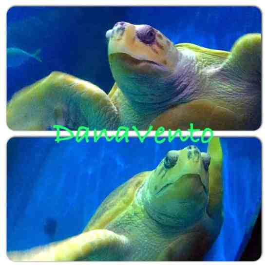 Virginia Aquarium, virginia beach, virginia, adventure, travel blogger, traveling, family, family destination, touring, tourism, virginia tourism, family time, family vacation, insideVirginia-Aquarium, turtles, sharks, manta rays, dolphines, alligator, parking, dana vento, travel blogger, travel bug, ad