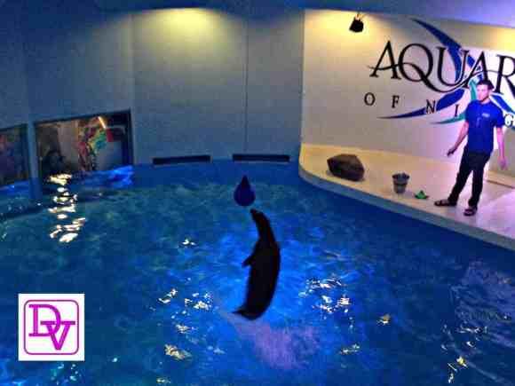 Aquarium of niagara, niagara fall, niagara falls usa, new york, tourism, traveling, adventure, families, fish, ocean life, anemones, lake erie, gorge, parking, show, seals, day trip, travel blogger, dana vento, vacation, ad