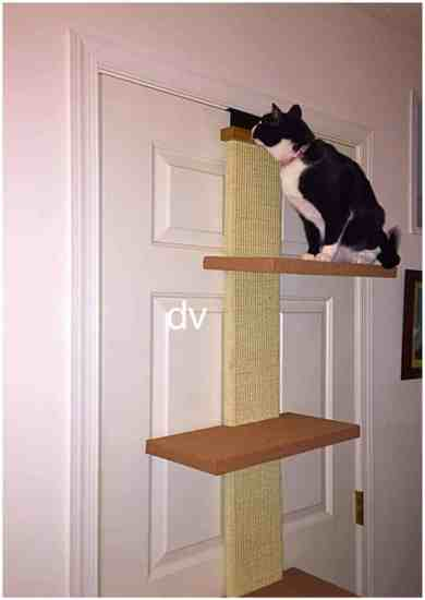 cat, kitty, kitty cat, climber, fibrrous, sisal, spring-laided hinges, carpeted platforms, scratching, multi-level, climb to nowhere, natural play, cat climber, smartcat, smart products for smart cats