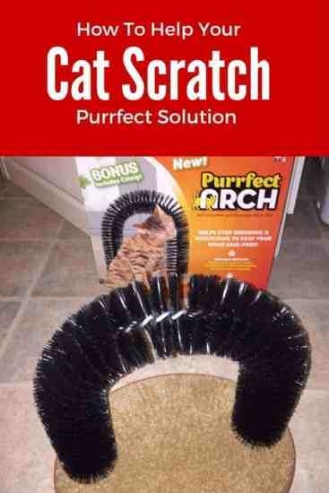 cat, cat scratcher, attach, bristle, bristle arch, catnip, carpet, kitty, cat, kitty cats, tuxedo cat, bella thecat, ad