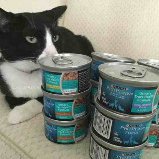 cats, 3 Perks Of Being A Cat Owner, pets, house pet, bella the cat, purina pro plan wet food, nutrition, ad