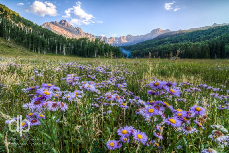 Asters in Mountain Shadows landscape photo by Dan Bourque