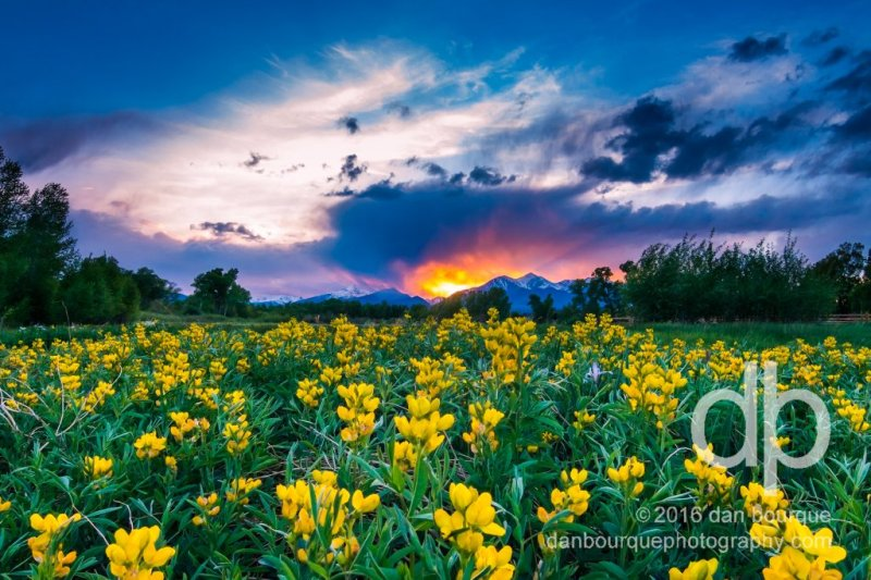 Goldenbanner Sunset landscape photo by Dan Bourque