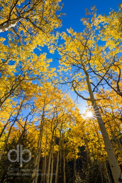 Rays Through Golden Trees landscape photo by Dan Bourque