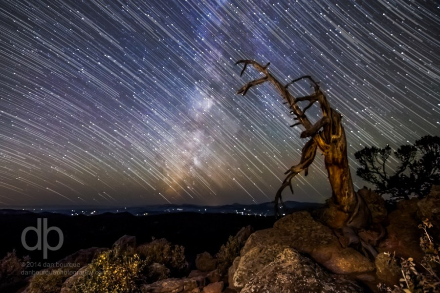 Star Trails and Old Tree night landscape photo by Dan Bourque