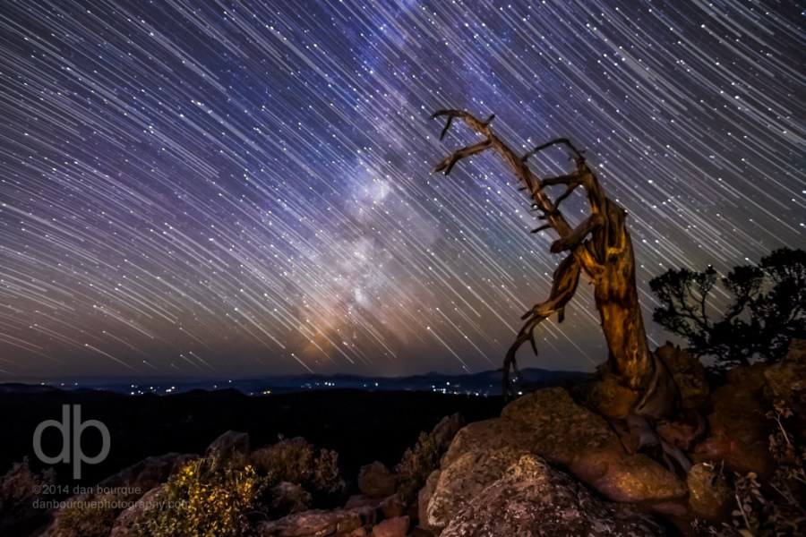 Star Trails and Old Tree night star trail photo by Dan Bourque