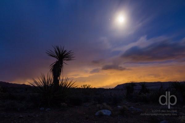 Yucca Moon landscape photo by Dan Bourque