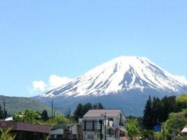富士山芝桜