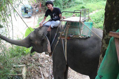 象のオペレータ