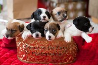 Puppies in a Basket!