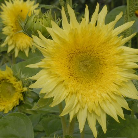 just let it go on the dance floor explode like this sunflower