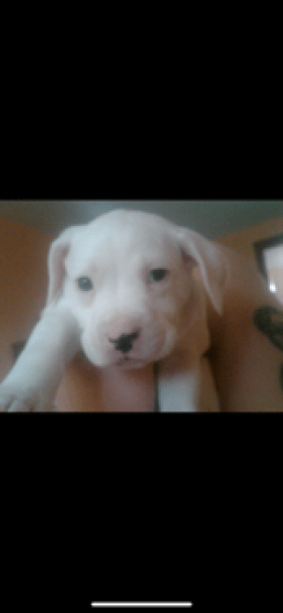 love that dog, dollar puppy