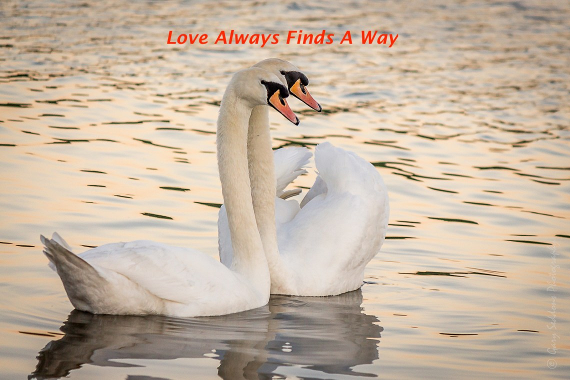 Love always finds a way
