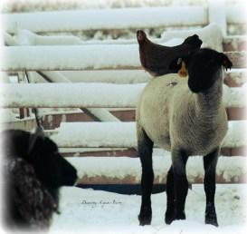 Warm woolen slippers