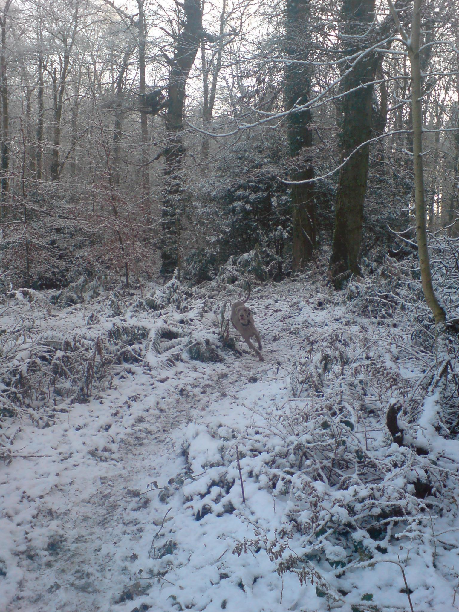 Max running in Hillsborough Forest