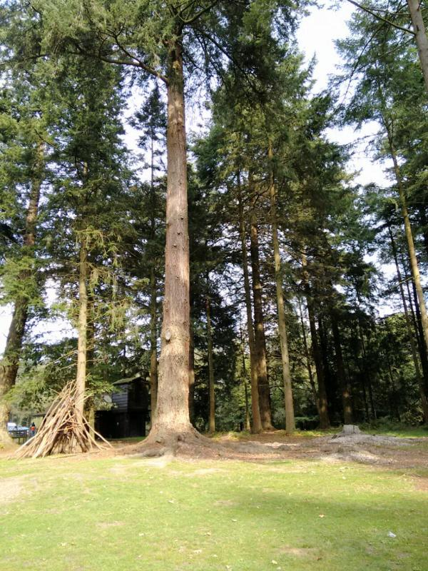 Deer Park New Forest UK