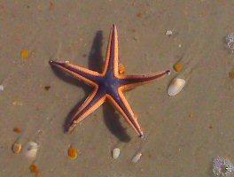 Greg found a living starfish