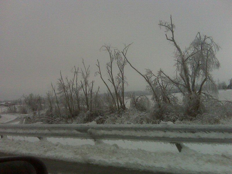 trees are broken under the heavy ice