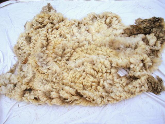 sally fleece