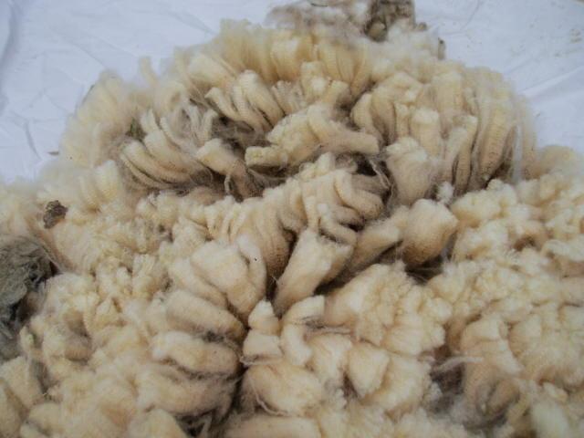 sally fleece2
