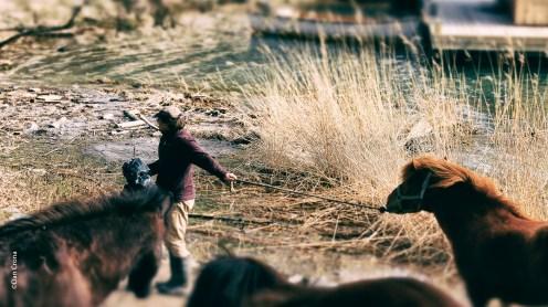 Nille o Hästarna 2