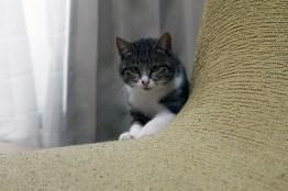元野良猫ニコがおやつ発見