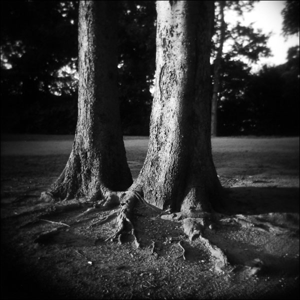 2005-07-15-two-trees