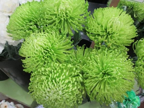 green fuji mums
