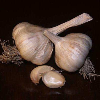 Sicilian Garlic