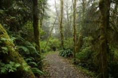 Trail at Cathedral Grove, Vancouver Island, B.C.