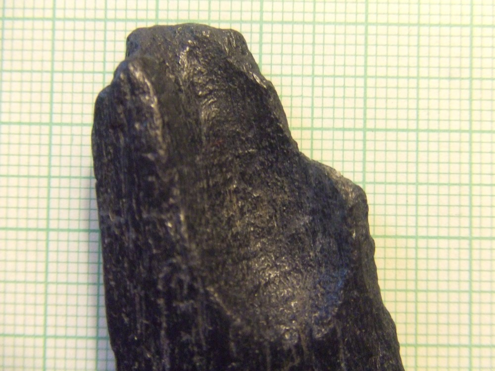 Recent Finds--Jeremy Inlet, Edisto Island, S.C. (1/3)