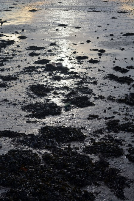 shore 4
