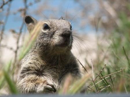 squirrel-1397283-640x480