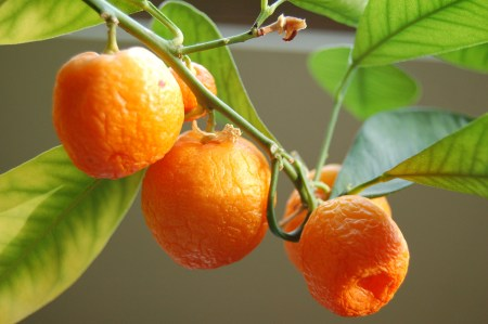 ...and orange...