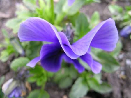 flower-2-1531676
