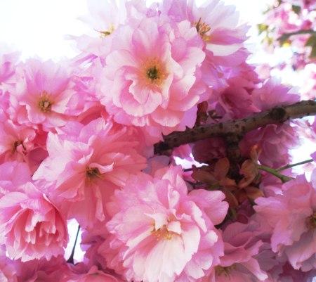 spring-1375081