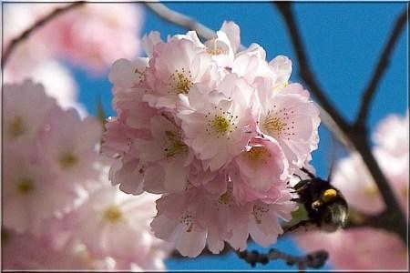 spring-1531122
